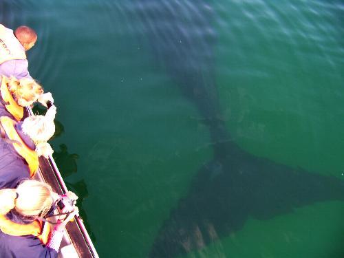 whaleunderboat
